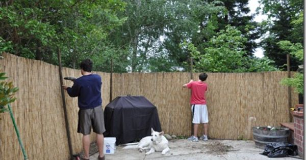 Landscaping Ideas To Hide Ugly Fence : Reed fencing to hide ugly back fence backyard