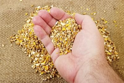 The Disadvantages Of Corn Fed Chicken Grain Free Dog Food Grain