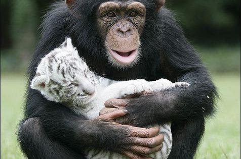 Unusual Animal Friends animals tiger adorable animal baby animals monkey wild animals
