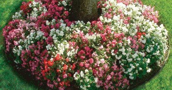 Однолетние цветы для дачи цветущие все лето фото с названием