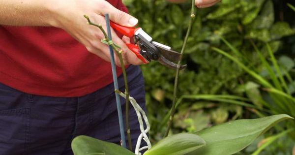 das kleine 1x1 der orchideen pflege pflanzen g rten und blumen. Black Bedroom Furniture Sets. Home Design Ideas