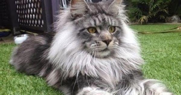 صور قطط كيوت اجمل القطط في العالم مجلة انا حواء Bad Cats Cats Funny Animals