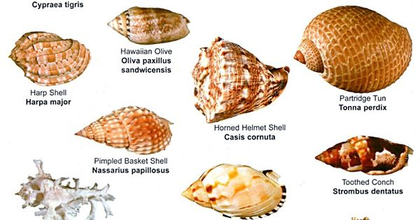 Shells Poster