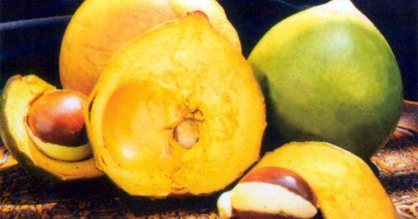 La Luma Tambien Conocida Como Lucuma Fruta Autoctona Del Sur Del Ecuador Dieta Per Diabetici Frutta Prodotti Per La Salute