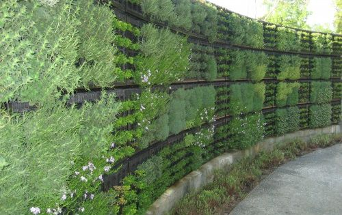 Living Wall in the Edible Garden, Atlanta Botanical Garden | Projects, People