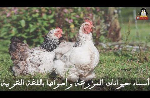 موسوعة حيوانات المزرعة أسماء حيوانات المزرعة وأصواتها باللغة العربية أسماء الحيوانات أصوات الح Youtube Food For Chickens Chickens Chicken Treats