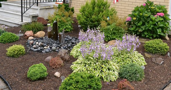 Low growing shrubs for front of house slow growing for Low growing low maintenance shrubs