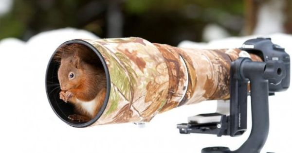 Funtomato Animals Photographers 28 Pics Animal Photo Animals Wild Squirrel Appreciation Day