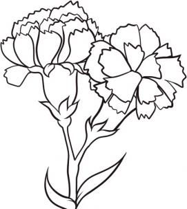 How To Draw Carnations Step By Step Flowers Pop Culture Free Online Drawing Tutorial Added By Da Flower Drawing Tutorials Flower Drawing Carnation Drawing