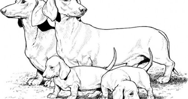 Dachshund Template Puppy Colouring Pages Puppy Coloring Pages