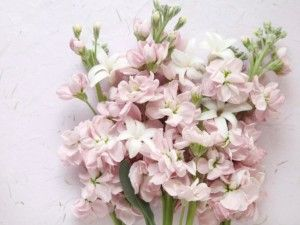 Kwiaty Sezonowe Dekorujemy Minimalistyczne Wesele Simplife Pl Kwiaty Bukiety I Slub