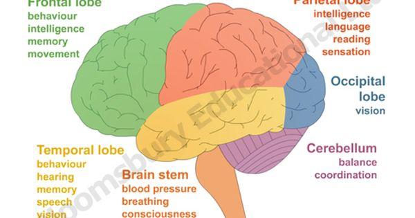 cranial nerves made easy cranial nerves examination. Black Bedroom Furniture Sets. Home Design Ideas
