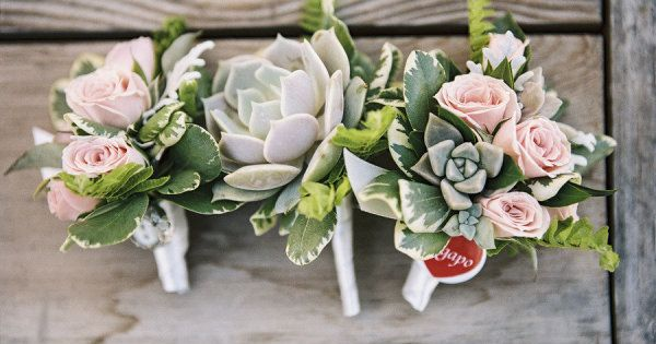 succulent and flower color combo