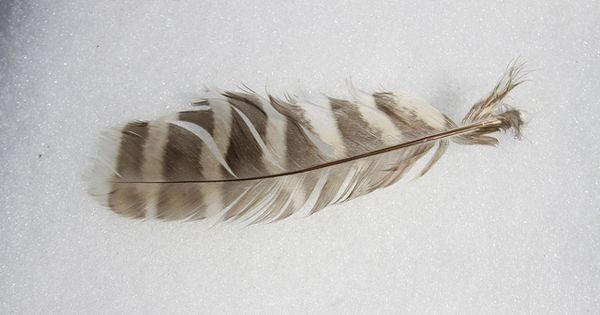 owl feather | tattoo ideas! | Pinterest | Tatoos
