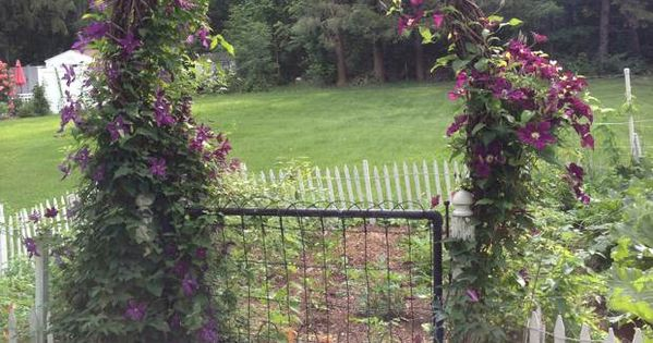 A grapevine arbor festooned with purple clematis provides for Elegant vegetable garden