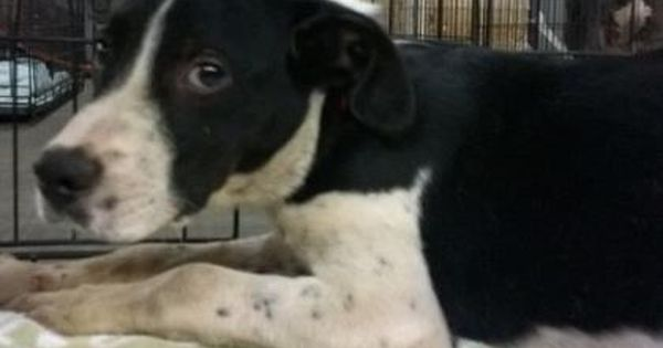 Adopted Jacoby Urgent Located At Dekalb County Animal