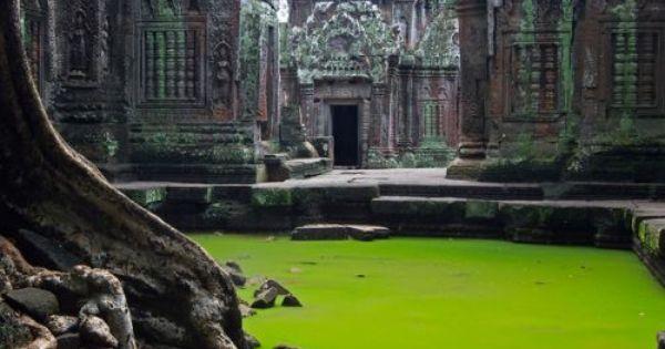 Ta Prohm Temple, Cambodia. Bucket List.
