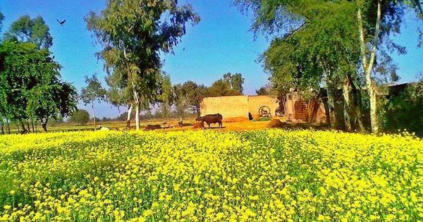 Rangla Punjab India Rangla Punjab India Pinterest India India Holidays And Beautiful