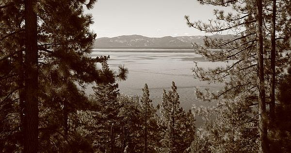 A view of lake tahoe through pine trees in sepia near for Lake tahoe architecture firms