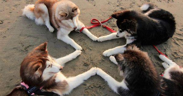 Cross Circle Huskies