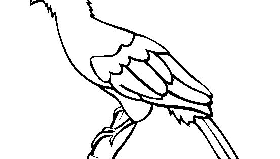 green turaco coloring page free green turaco online coloring para colorir 02 pinterest best 100 free and bird ideas