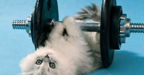 Animals Doing Exercises Cat Exercise How To Stay Healthy Fitness
