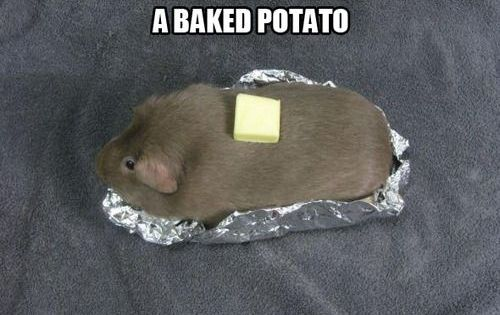 Name: guinea-pig-meme-day-42-humans-still-think-im-a-baked-potato.jpeg Views: 12087 Size: 116.1 KB