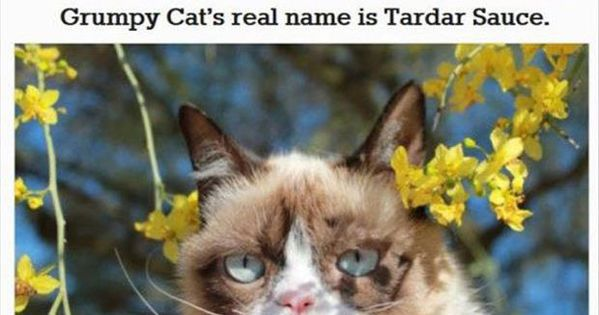 30 Things You Probably Didn't Know About Grumpy Cat