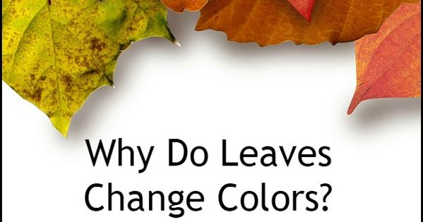 Here's The Scientific Reason Why Leaves Change Color In The Fall