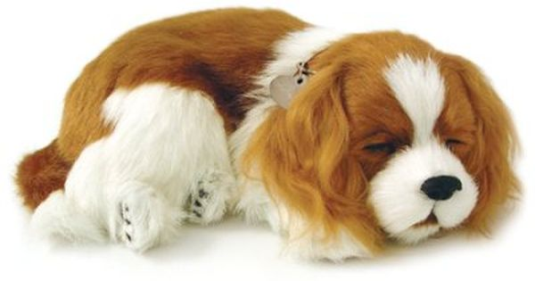Breathing Pet Cavalier King Charles King Charles Cavalier Spaniel Puppy Cavalier King Charles King Charles Puppy