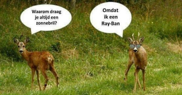 Ray Ban Hert