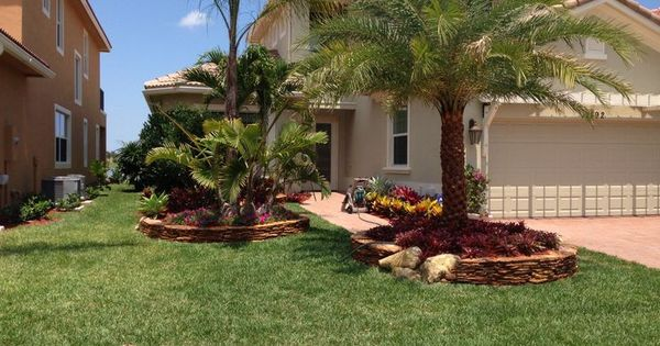 Sylvester date palm 10 feet clear trunk realpalmtrees for Landscaping rocks fort myers fl