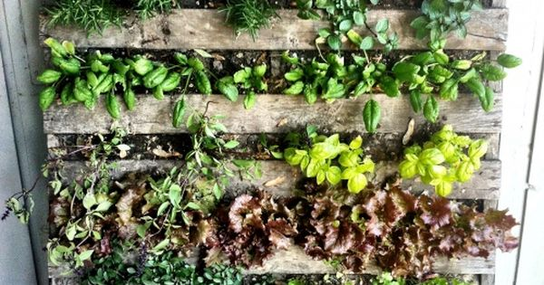 Learn How to Make a Pallet Garden in 7 Easy Steps!