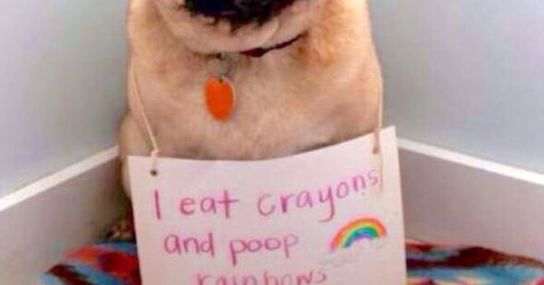 Why Do Dogs Like To Eat Crayons