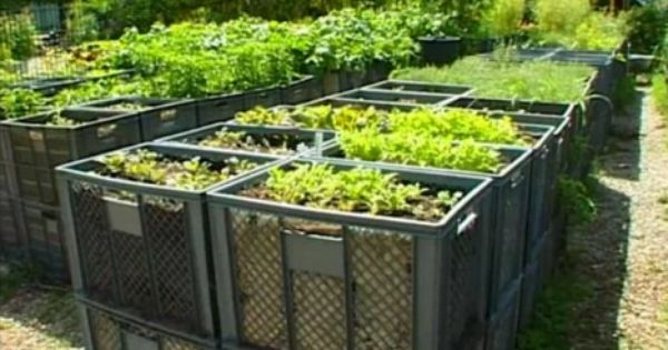 Extreme Container Gardening