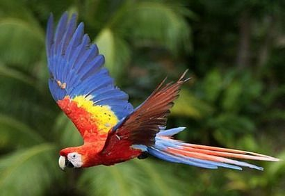 Rainforest Birds Flying Google Image Result fo...
