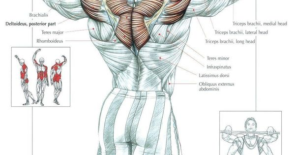 Upright Row Shoulders Upperback Workout Lifting