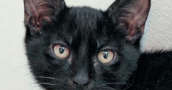 Cats Cat Love Adoption I Love Dogs