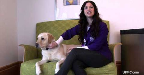 Meet Ziggy Children S Hospital Therapy Dog Youtube Therapy