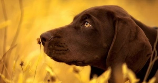50 Photos Of The Day By National Geographic Vol 2 German Shorthair Animals