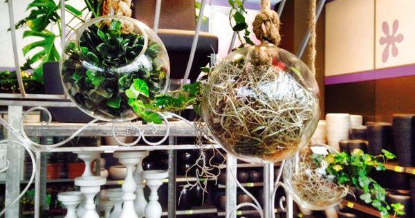 Leuke glazen hangbollen gevuld met kamerplantjes 2015 for Intratuin cruquius