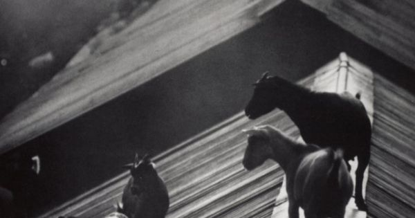Goats on the Roof, W. Eugene Smith (1954). LIFE Magazine