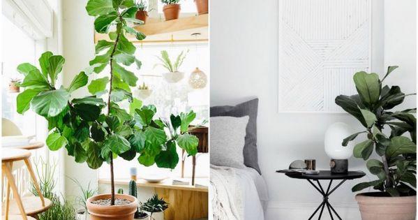Bien choisir sa plante d 39 int rieur jardinage plantes et jardin int rieur for Choisir plantes jardin
