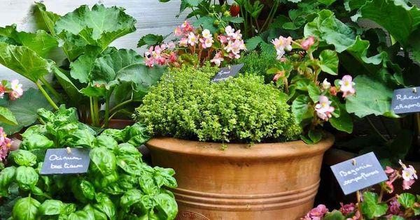 potager en carr ou en pots pour petits espaces jardin potager pinterest pots. Black Bedroom Furniture Sets. Home Design Ideas