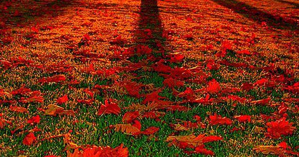 #fallbeauty, fallcrafts, autumnleaves, pumpkins, acorns falldecoration http://balancedgreen.org