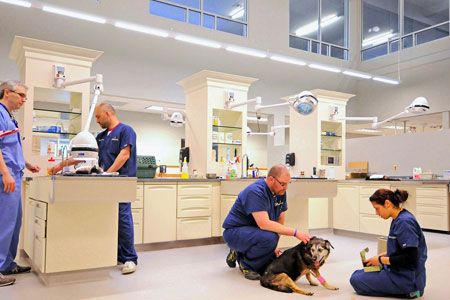 Northstar Vets Wish Upon A Star Hospital Design Veterinary Hospital Veterinary Clinic
