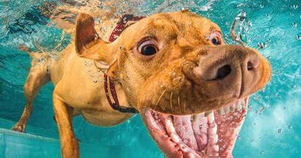Bandit Magyar Vizsla Vizsla Welpen Hunde Fotos Haustiere