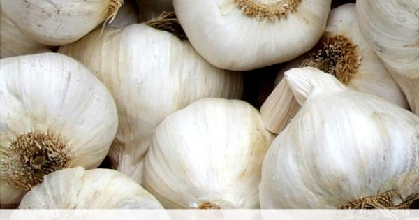 Garlic is well known as a natural health remedy that has long been used to treat various - Surprising uses for garlic ...