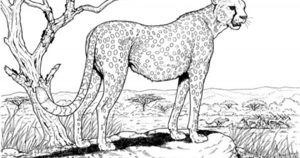 Cheetah Animal Coloring Pages Adult Coloring Pages Cat Coloring Page