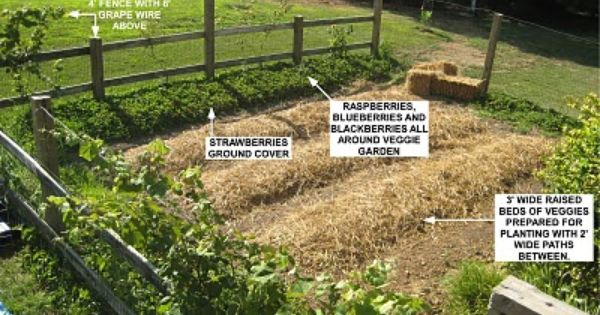 Modern Sustainability Old Fashioned Methods Growing Vining Berries Around The Perimiter Of The Garden Fence Syste Berry Garden Lawn And Garden Growing Food